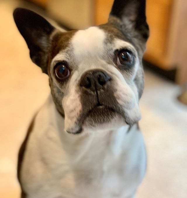 Miles turns 10 today!